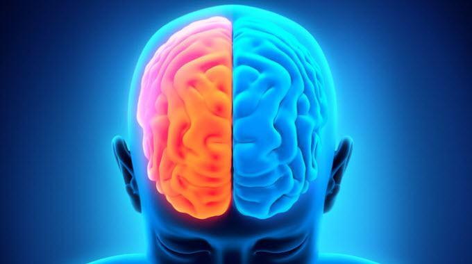 left_brain